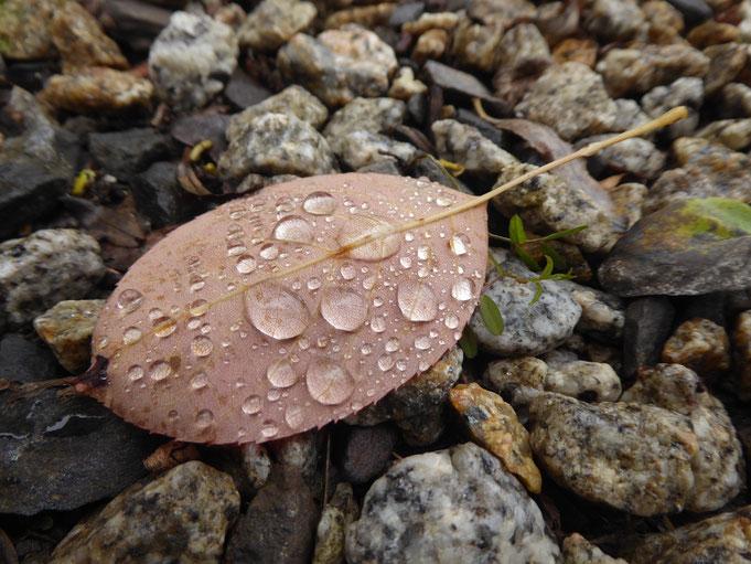 Blatt mit Wassertropfen auf Kies im Herbst