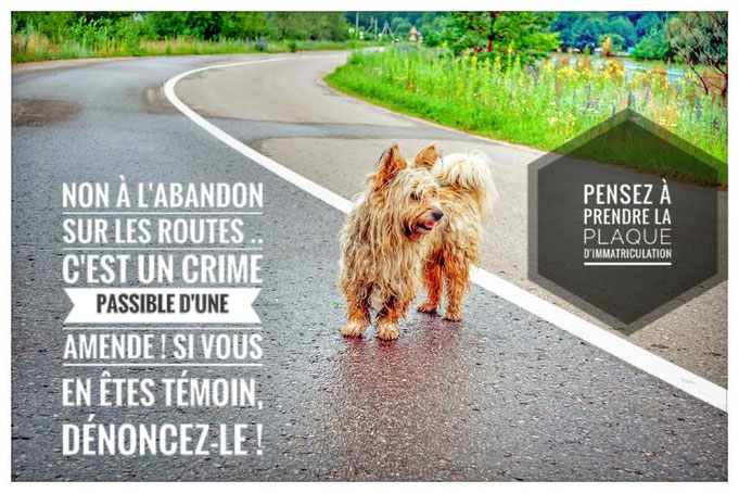 crime,amende,abandon,animaux,chien,route,plaque d'immatriculation,