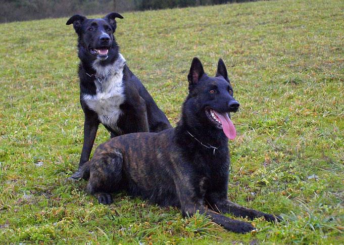 Mickey (hinten) und Ares am Weihnachtsspaziergang 2009