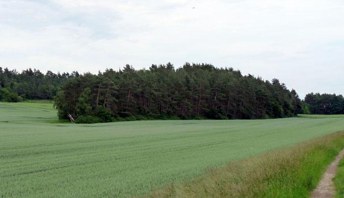 Der Scharfenberg zwischen Westerhausen und Quedlinburg