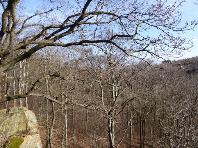 Der Bielstein am Ziegenkopf östlich der B 27, Ruheplatz auf dem kleinen Podest