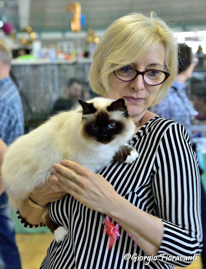 gatto, paola, birmano, sacro di birmania, foto con gatto