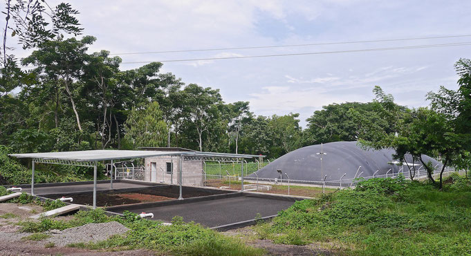 Lagoon digester for dairy waste water and pig manure