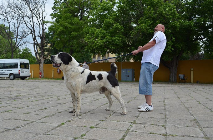 EZGER IZ RUSKOG IZVORA, owner: József Rácz (Hungary)