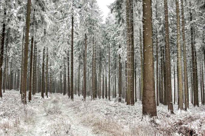 Der Schnee verzaubert den Wald
