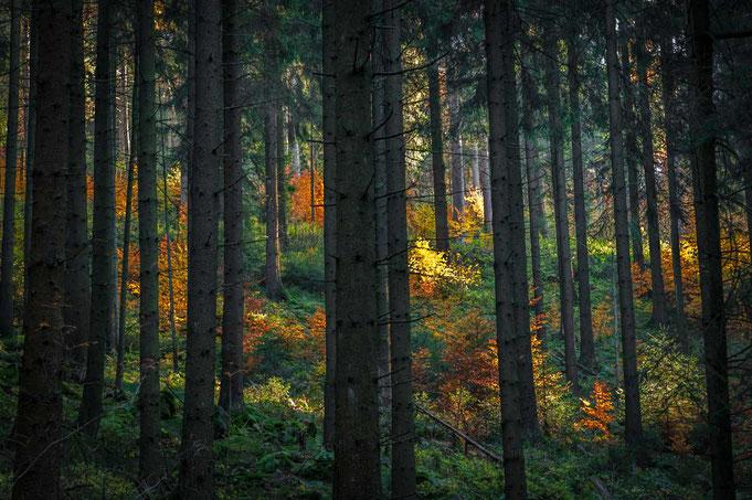So wie wir den Herbst kennen, bunt und farbenfroh