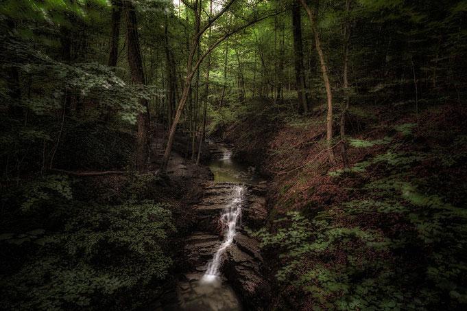 Der Rickbach mit seinen Kaskaden läuft durch ein dicht bewaldeten Wald.