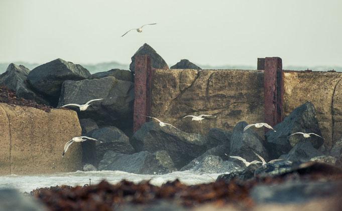 Seevögel auf Futtersuche