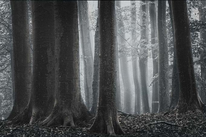 Majestäten im Wald