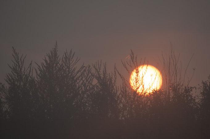 Sonne im Nebel.