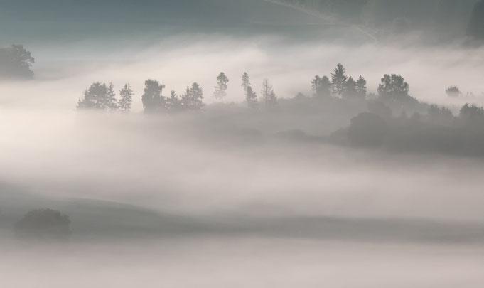 Der Wald liegt im Nebel