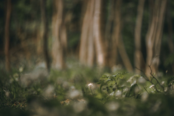 Auch einzelne Blüten haben ihren Reiz, besonders wenn der Hintergrund so schön ist wie diese schlangenförmigen Bäume.