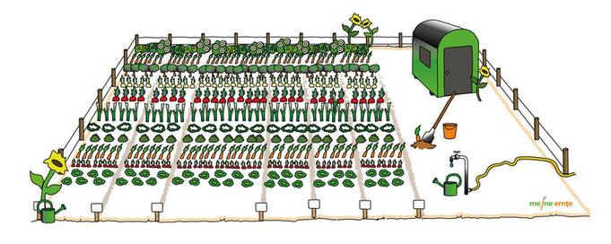 Mein eigener Garten - meine ernte - Gemuesegarten fuer Alle - bahce