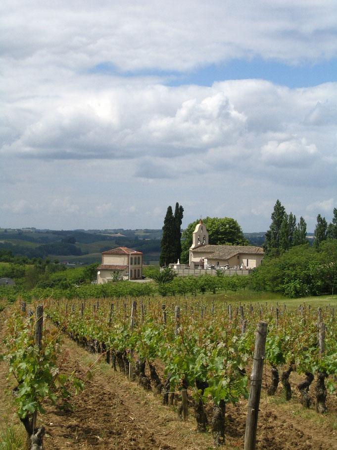 Eglise de Camareil et vignes