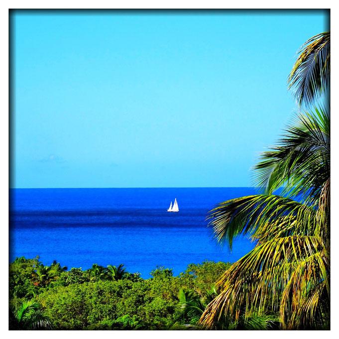 Plage de Grande-Anse et Mer des Caraïbes à deux pas du Mangoplaya