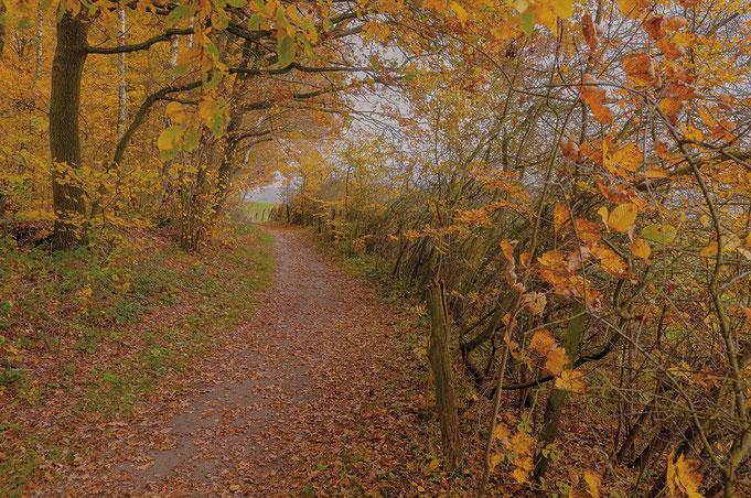 Ein herbstlicher Weg am Knick führt zum Duvenstedter Brook im Norden Hamburgs