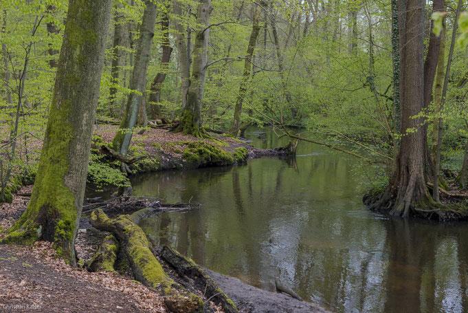 Die wilde Bille mäandert durch das Naturschutzgebiet Sachsenwaldau.