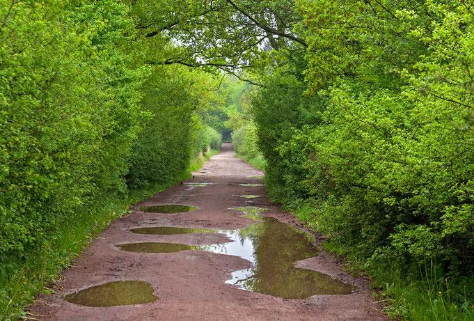 Der alte Verbindungsweg nach Pinneberg führt durch den Redder mit bunten Knicks entlang. Die Pfützen erfordern Ausweichmanöver! Foto: Christian Kaiser