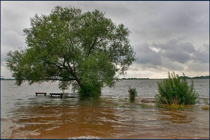 Das Hochwasser hat die Bänke am Strand von Blankenese überspült. Die Weiden sind Reste von Weichholzauwald.