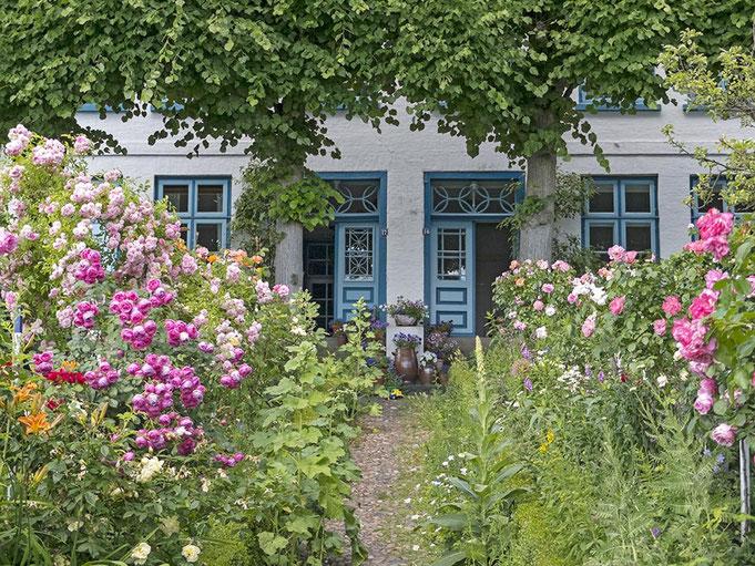 Roses and flowers in hamburg Blankenese in the Summertime