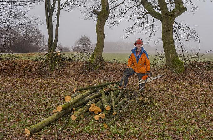 Richtig auf den Stock gesetzt: Knick am Kattendorfer Hof, viel Holz ergibt es nicht wenn die alten Bäume [überhälter] stehen bleiben