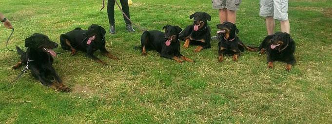 Griff, Jazzy, June, Junior, Joy et Djazz