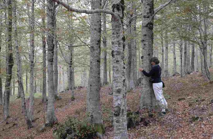 Silvoterapia: abbracciare gli alberi fa bene alla salute