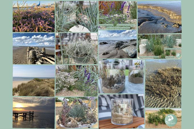 #Sand #Strand #Strandbotanik #Meerwasser #SandBeet #StrandGrün #Gartenbotschafter #Strandhafer #Tauwerk #Glas