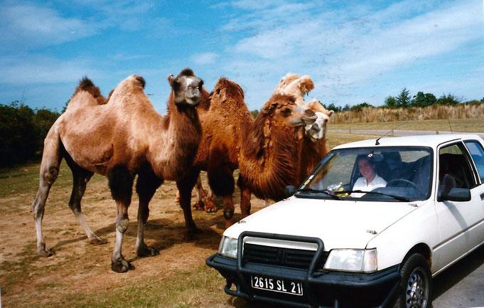 peugeot 205 parebuffle chameau désert 4x4