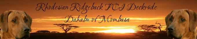 FCI Rhodesian Ridgeback Deckrüde Dahabu of Mombasa