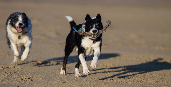 Hund, Normandie, Urlaub, Urlaub mit Hund, Ferien, Ferien mit Hund, Hundestrand
