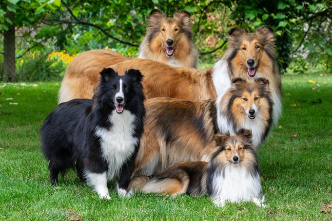 Unsere vier Mädels. Luna, Cleo (hinten) und vor ihnen Candy und Nelly