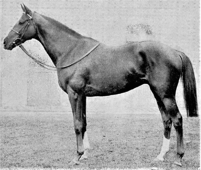 """""""Le Fabuleux"""" premier champion né du Quesnay"""