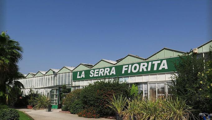 Vivaio Di Piante In Sardegna La Serra Fiorita Assemini