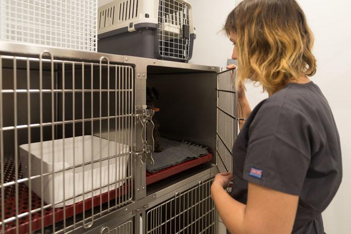 Servicio de hospitalización veterinaria