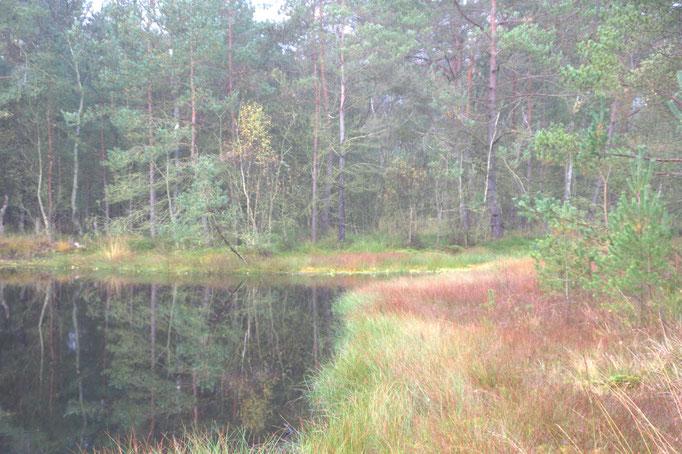 Moorsee mit Torfmoos-Schwingrasen [Foto:NABU/K.-H. Kabbeck]
