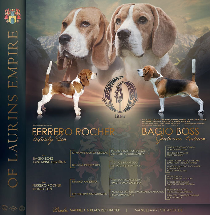 Bagio Boss Gintarine Fortuna * Lord James *, Czarnowsky , Beagle, Beagle, Beagle, Beagle, Beagle, Champions, Winner, the Best, Love, Star, Puppys