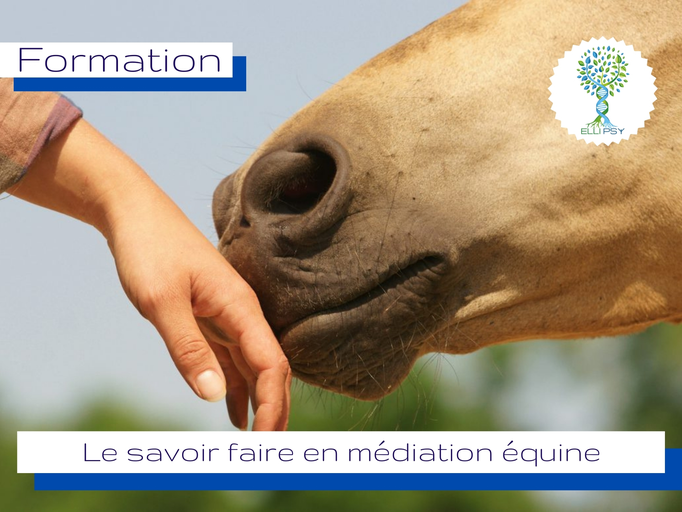 www.ellipsy.fr, formation thérapie brève avec le cheval, formation équithérapie, horse coaching, SFE, FENTAC, équicie, équithérapeute