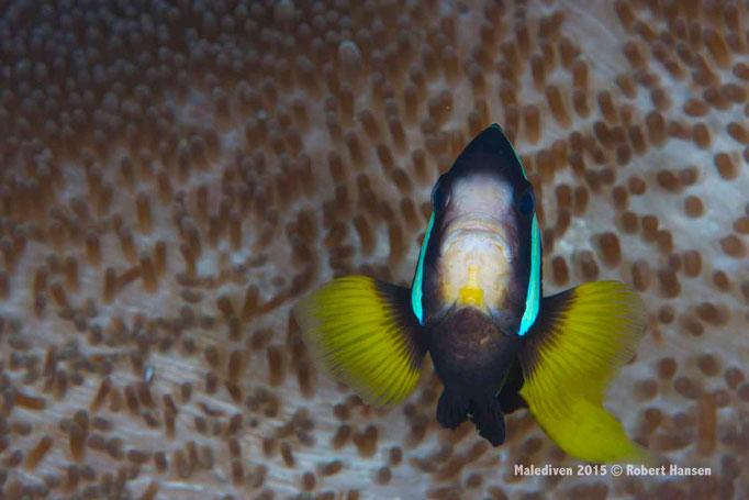 Ich mache mich ganz gross - Malediven 2015 © Robert Hansen