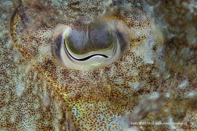 Auge einer Sepia © Robert Hansen, April 2016