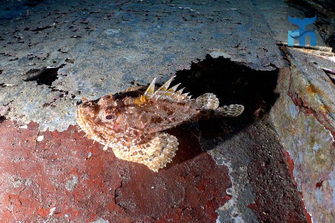 Drachenkopf auf rostendem Blech in der Pasewalk © Robert Hansen