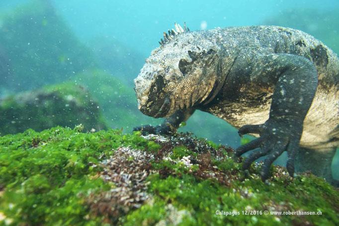 Galapagos, 12/2016 © Robert Hansen