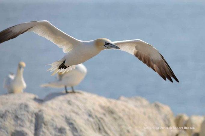 Eine kurze Runde um den Vogelfelsen © Robert Hansen