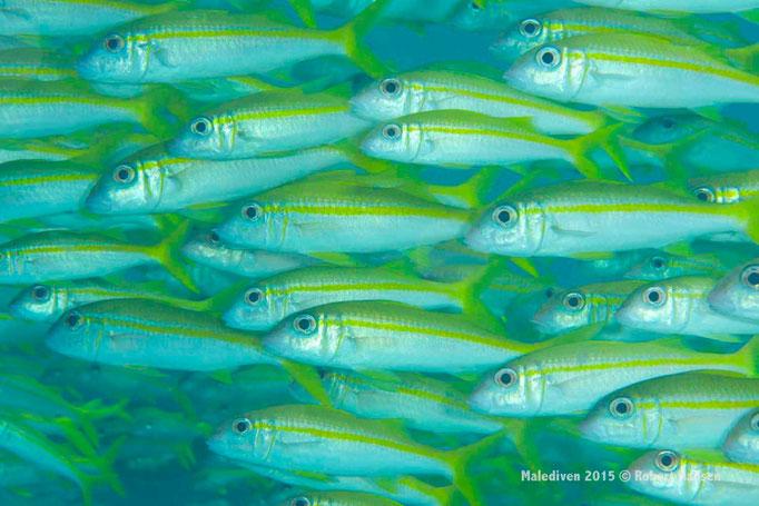 Gemeinsam unterwegs - Malediven 2015 © Robert Hansen