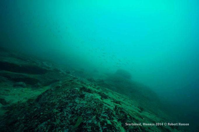 Hav / Sea / Meer - Hinnøya 2014 © Robert Hansen