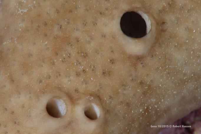 Schwammformationen © Robert Hansen, Gozo Oktober 2015
