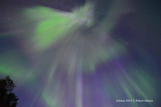 Nordlys - Polar Light - Nordlicht. Svartskard/Lofoten, 01.09.2014, 01:32 © Robert Hansen