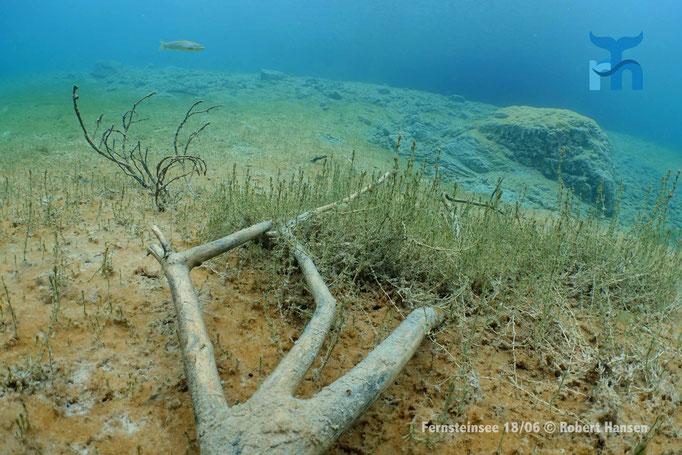 Totes Holz und Wasserpflanzen im Fernsteinsee.