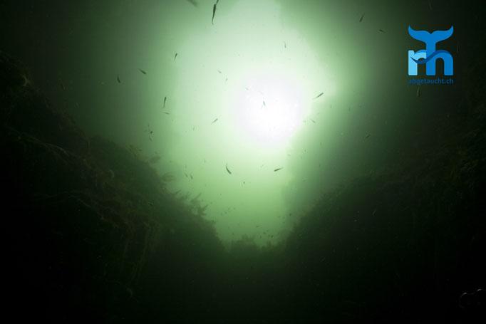 Gegenlicht in einem Torbogen an der Nordküste in zehn Metern Tiefe © Robert Hansen, Juli 2019