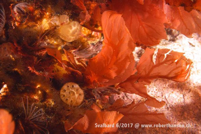 Farbenpracht © Robert Hansen